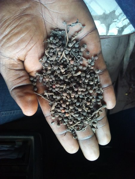 Used Black pepper organic in Dubai, UAE
