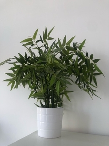 Used Fake plants  in Dubai, UAE