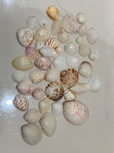 Used Sea shells collection in Dubai, UAE